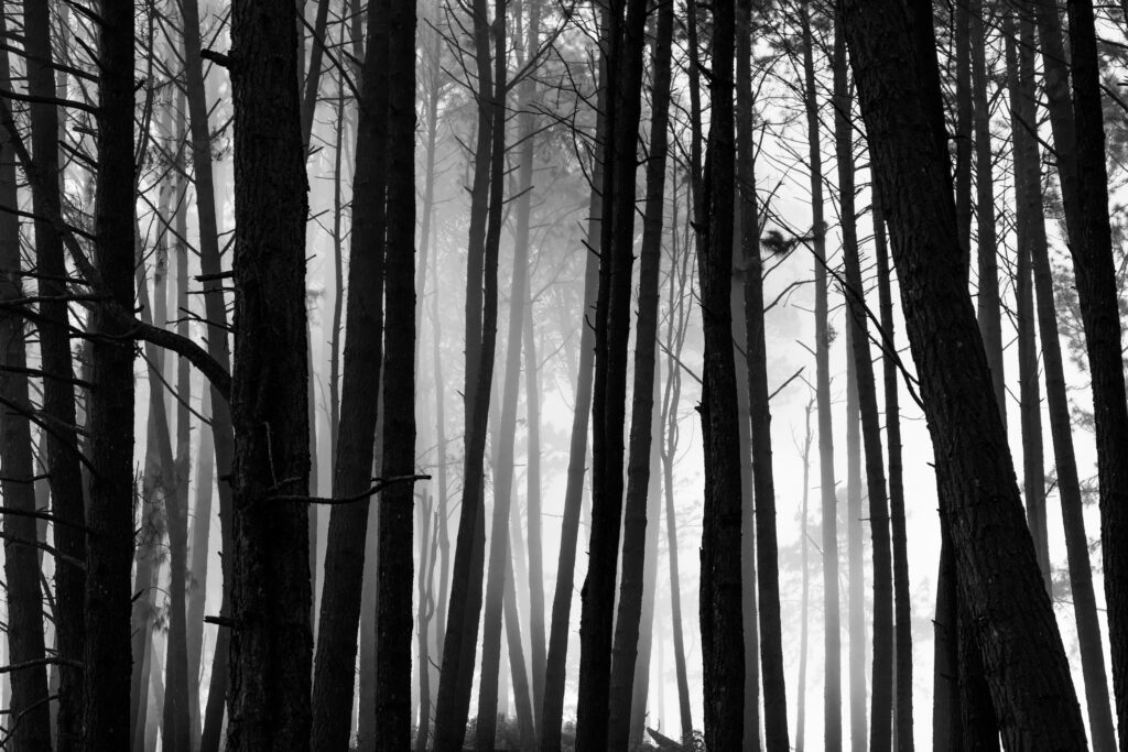 Lankan Forest img source unsplash